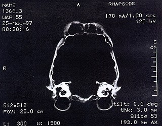 CT-scan-of-cheetah-pic2-120399